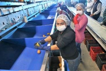 Sinaloa de las entidades con mejor desempeño en el Segundo Trimestre del 2020 en el ITAEE del INEGI