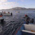 Amplía Conapesca el plazo mínimo de permisos para la pesca comercial