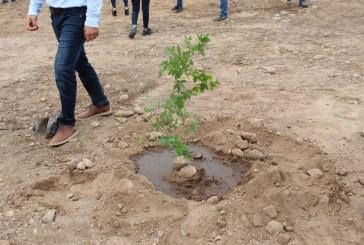 Contribuye SEDESU a la creación de corredores verdes en Elota