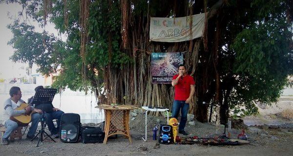 El Gran Árbol de Mazatlán en Jacarandas el Gran Ejemplo a Seguir 2020 3