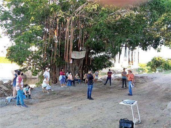 El Gran Árbol de Mazatlán en Jacarandas el Gran Ejemplo a Seguir 2020 4