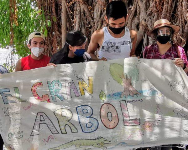 El Gran Árbol de Mazatlán en Jacarandas el Gran Ejemplo a Seguir 2020 1
