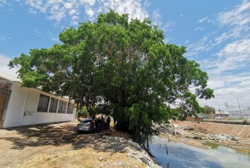 Mitigar los efectos del cambio climático es un tema inaplazable para Sinaloa: Carlos Gandarilla