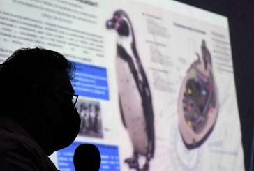 ¿Un Pingüinario en Mazatlán?