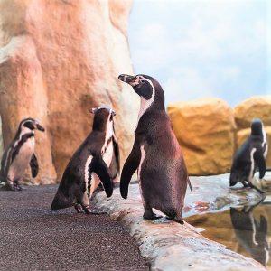 Pingüinario Mazatlán Proyecto Acuario Mazatlán 2020 4