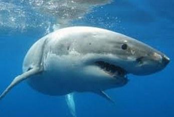 Se levanta la veda del tiburón y rayas en la zona pacífico hoy, 1 de agosto