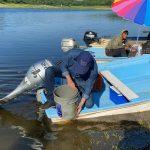 Siembra de alevines de tilapia en dique el Batamote y en la Cofradía