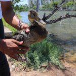 Trabaja Acuario Mazatlán, en pro de la conservación de las especies