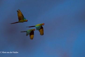 El Reino de las Guacamayas Verdes; la selva tropical seca