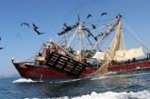 Trabajan autoridades y la industria pesquera para lograr la recertificación del camarón de altamar