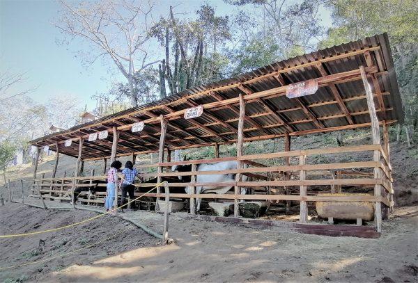 La Vaca Lupe Zona Trópico Turismo Rural Sinaloa México