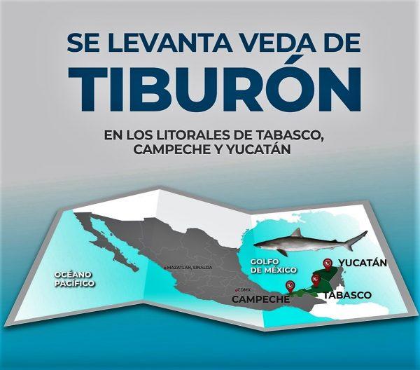 Se levanta veda de Tiburón en México 2020