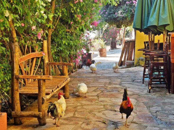 Turismo Rural Gallinas 2020
