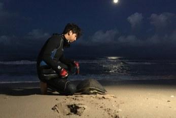 Vuelve a la vida, Acuario Mazatlán a tortuga prieta rescatada en Playa Ceuta.