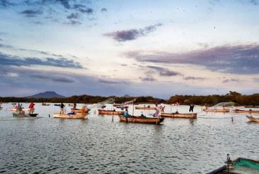 Anuncia Agricultura el levantamiento de veda de camarón en el océano Pacífico y Golfo de California publicado en el DOF