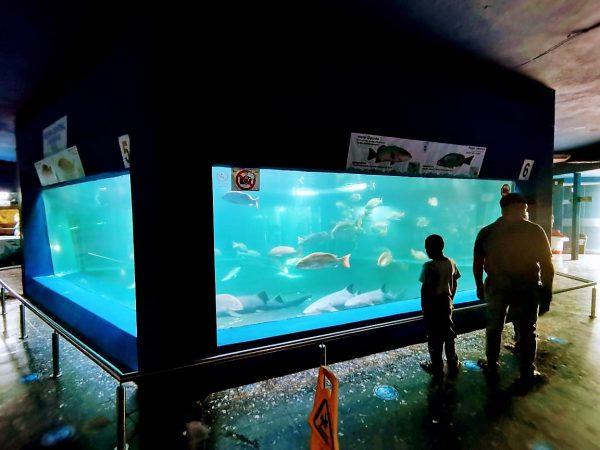 Acuario Mazatlán en las Preferencias de los Visitantes 2020 2