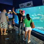 Galería de Fotos Acuario Mazatlán Octubre 2020 (9)