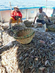 Primer Reporte de la Zafra de Camarón 2020-2021 Pacífico (2)