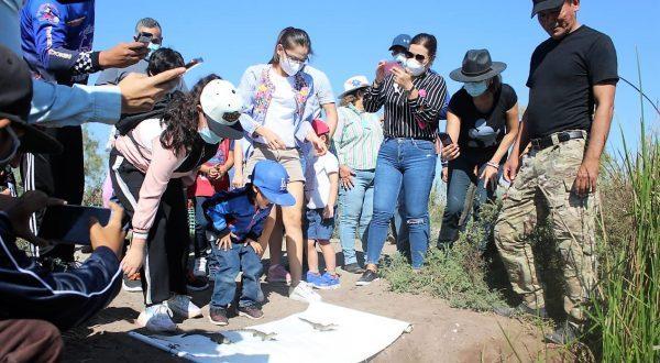 En Laguna de Chiricahueto Sinaloa Sobreviven el 80% de la Crías de Cocodrilo Beto Caimán 1