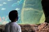 Acuario Mazatlán Fascina a Niños del Hogar San Pablo