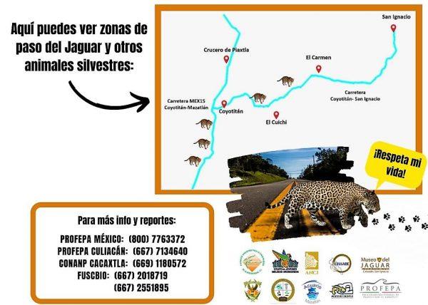 Salen en Defensa del Jaguar Habitantes de Comundiades de San Ignacio, Sinaloa, México, Zona Trópico 2020 3 Bolante 2