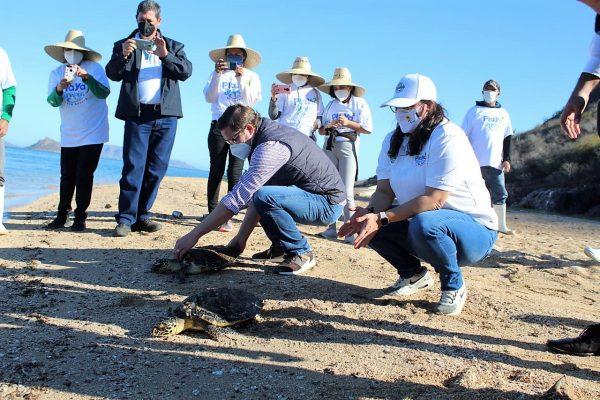 La Tortuga Carey es Protegida en la Bahía Navachiste Sinaloa México 1