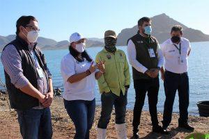 La Tortuga Carey es Protegida en la Bahía Navachiste Sinaloa México 2
