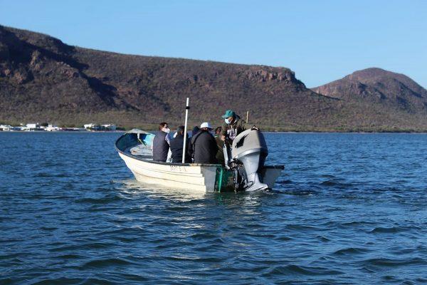 La Tortuga Carey es Protegida en la Bahía Navachiste Sinaloa México 3