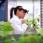 Lidera Sinaloa la creación de empleos en Diciembre 2020