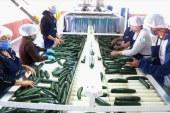 Sinaloa de los estados con mejor comportamiento en su economía en el Tercer Trimestre del 2020 en el ITAEE del INEGI