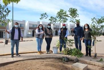 Suma SEDESU 200 mil árboles donados para incrementar la cobertura forestal de Sinaloa