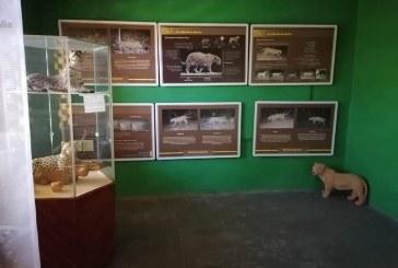 JAGUAR de Sinaloa