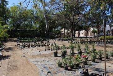 SEDESU y Jardín Botánico invitan a adoptar una planta para lograr un mundo más vivo
