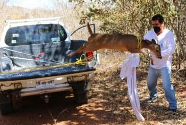 Acuario Mazatlán reitera el compromiso con la fauna y su sobrevivencia.
