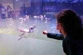 Mazatlán ya cuenta con un Pingüinario y aumenta con ello su atractividad