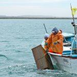 Evita la sobreexplotación y beneficia al sector pesquero la aplicación de vedas de especies marinas