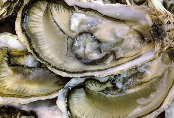 Libre de veda sanitaria para moluscos todo el litoral de Sinaloa