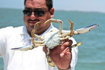 Adelantó Gobierno Federal inicio de captura de jaiba en Sinaloa, en beneficio de los pescadores de la zona
