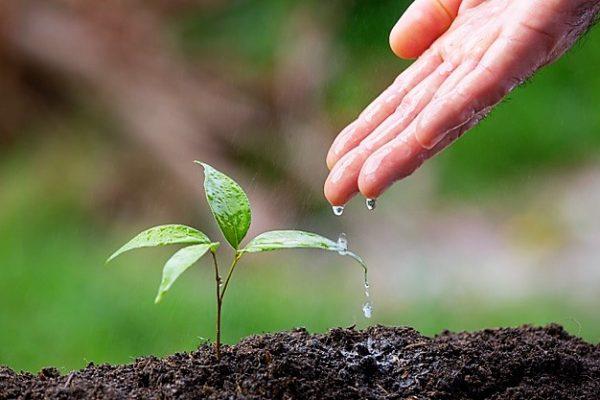 Día Mundial del Medio Ambiente 2021 1