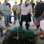 Difunde Conapesca plan de acciones emergentes implementadas por el Gobierno de México para la recuperación de la certificación camaronera
