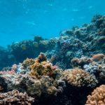 Reconoce ONU Medio Ambiente contribución de SEDESU en la campaña Mares Limpios