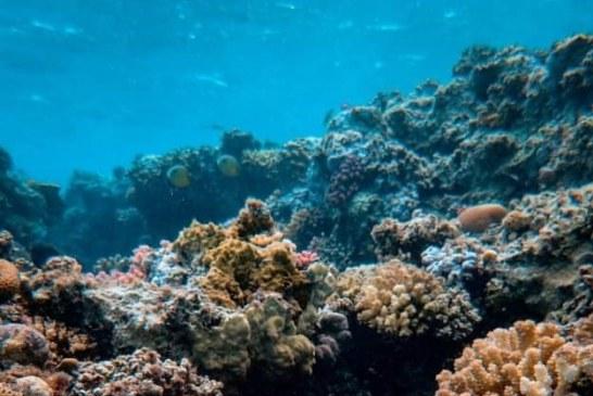 Día Mundial de Medio Ambiente Un día para reflexionar: Pesca Azteca