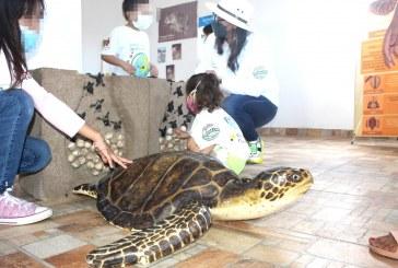 SEDESU y Fundación Coppel fortalecen trabajo de la Red Tortuguera de Sinaloa