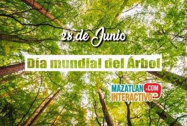 El 28 de junio muchos países celebran el Día Mundial del Árbol