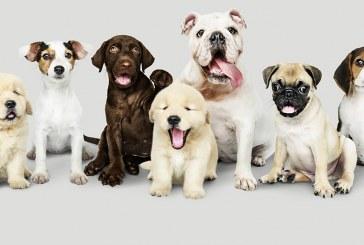 Día Mundial del Perro Se celebra: 21 de julio