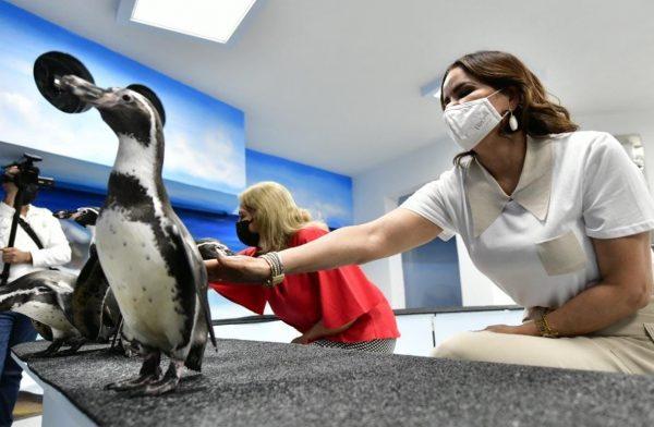 Fue Inaugurada la Segunda Etapa del Pingüinario Maztalán 2021 1