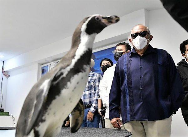 Fue Inaugurada la Segunda Etapa del Pingüinario Maztalán 2021 3