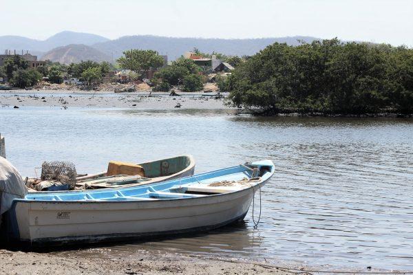 Ojo Sinaloa Hoy 26 de Junio es el Día Internacional de los Manglares y en Verdad que Pena lo que Pasa en Sinaloa con ellos 2021 8
