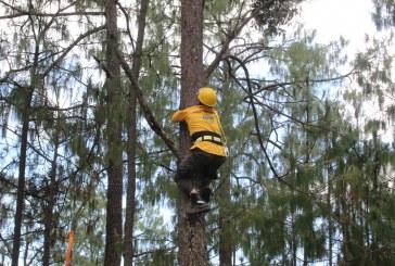 SEDESU entrega herramientas especializadas para Sanidad Forestal