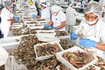 Se acuerda un proceso expedito para el levantamiento del embargo del camarón mexicano